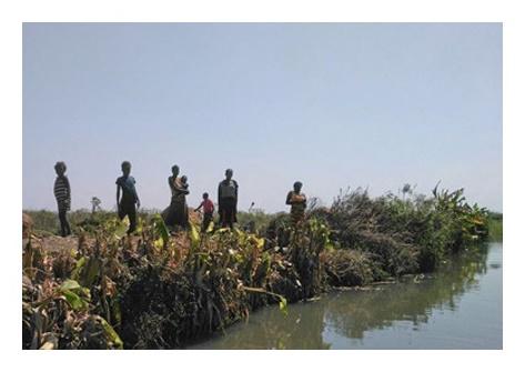 Zambia 2 paludi (3)